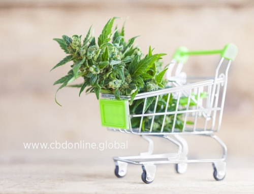 Thinking About Starting a CBD Business? Here's How to Break In to the Market!