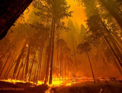 Could Hemp Construction Prevent Wildfire Damage?